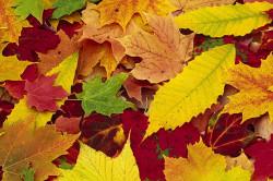 Опавшие листья для питательной смеси для грибов