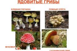 Виды ядовитых грибов