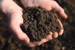 Влажная почва для грибов