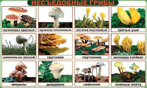 Схема несъедобных грибов