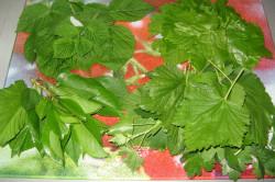 Листья малины и вишни и других кустарников для маринования по деревенскому рецепту