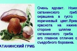 Признаки сатанинского гриба
