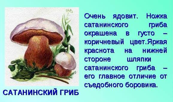 гриб сатанинский описание и фото