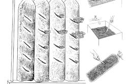 Схема выращивания вешенки