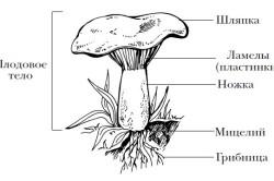 Схема гриба