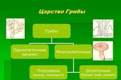 Классификация царства грибов