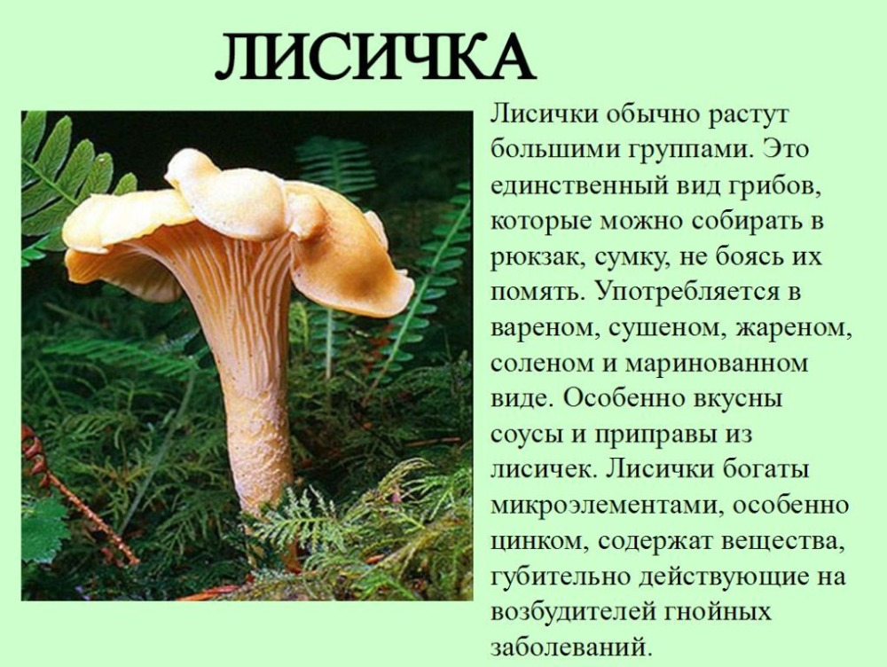 грибы лисички от паразитов применение