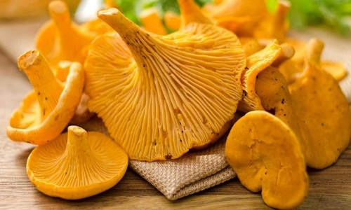 грибы лисички и картошка рецепты